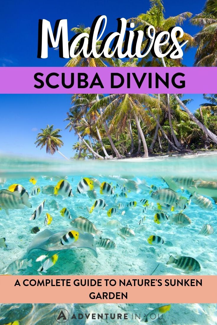 Maldives Diving | Interested in taking a diving trip to nature's sunken garden? Here's everything you need to know for planning a trip to Maldives paradise!