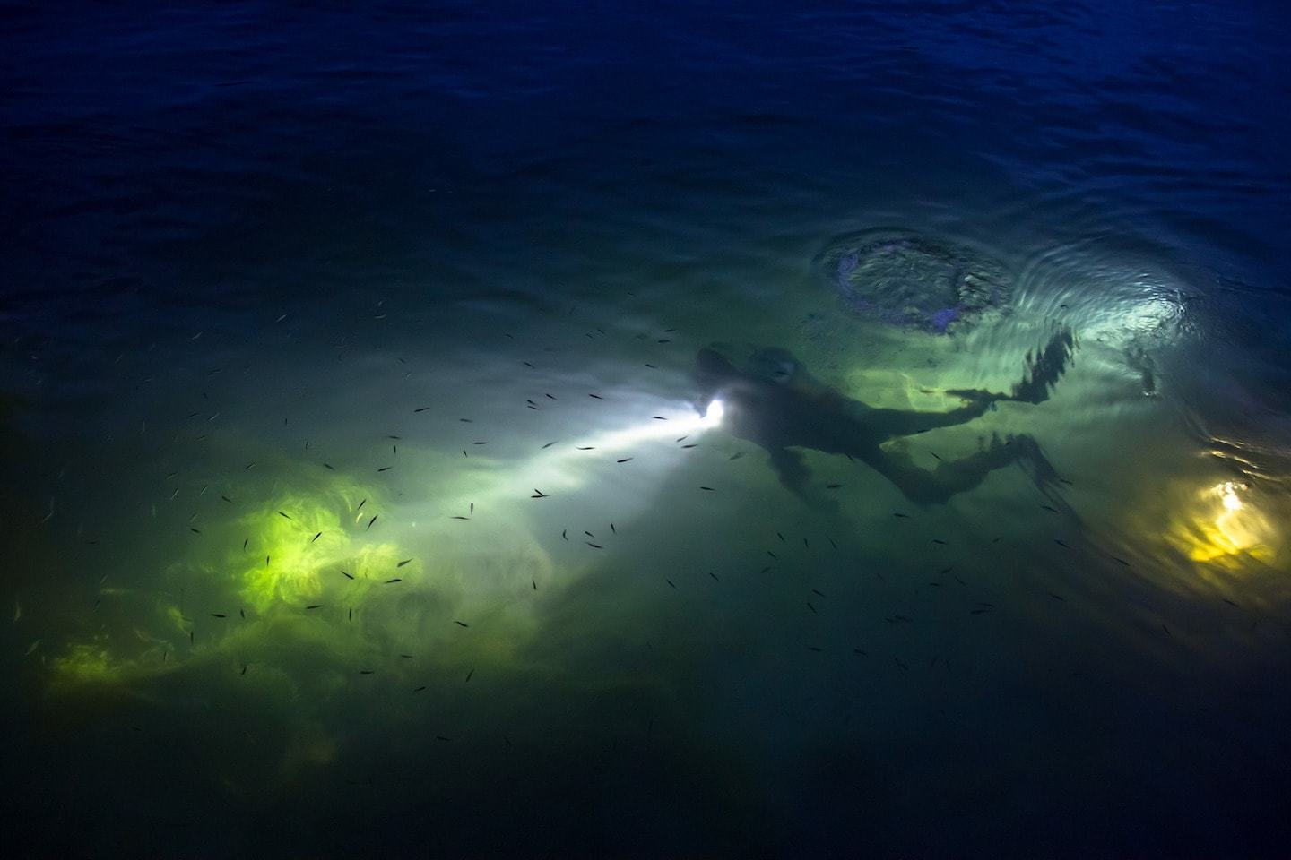 person diving at night with flashlight