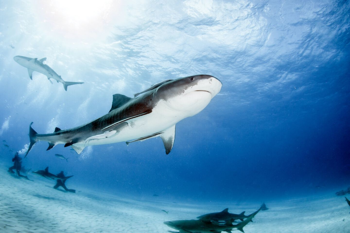 seeing sharks while diving