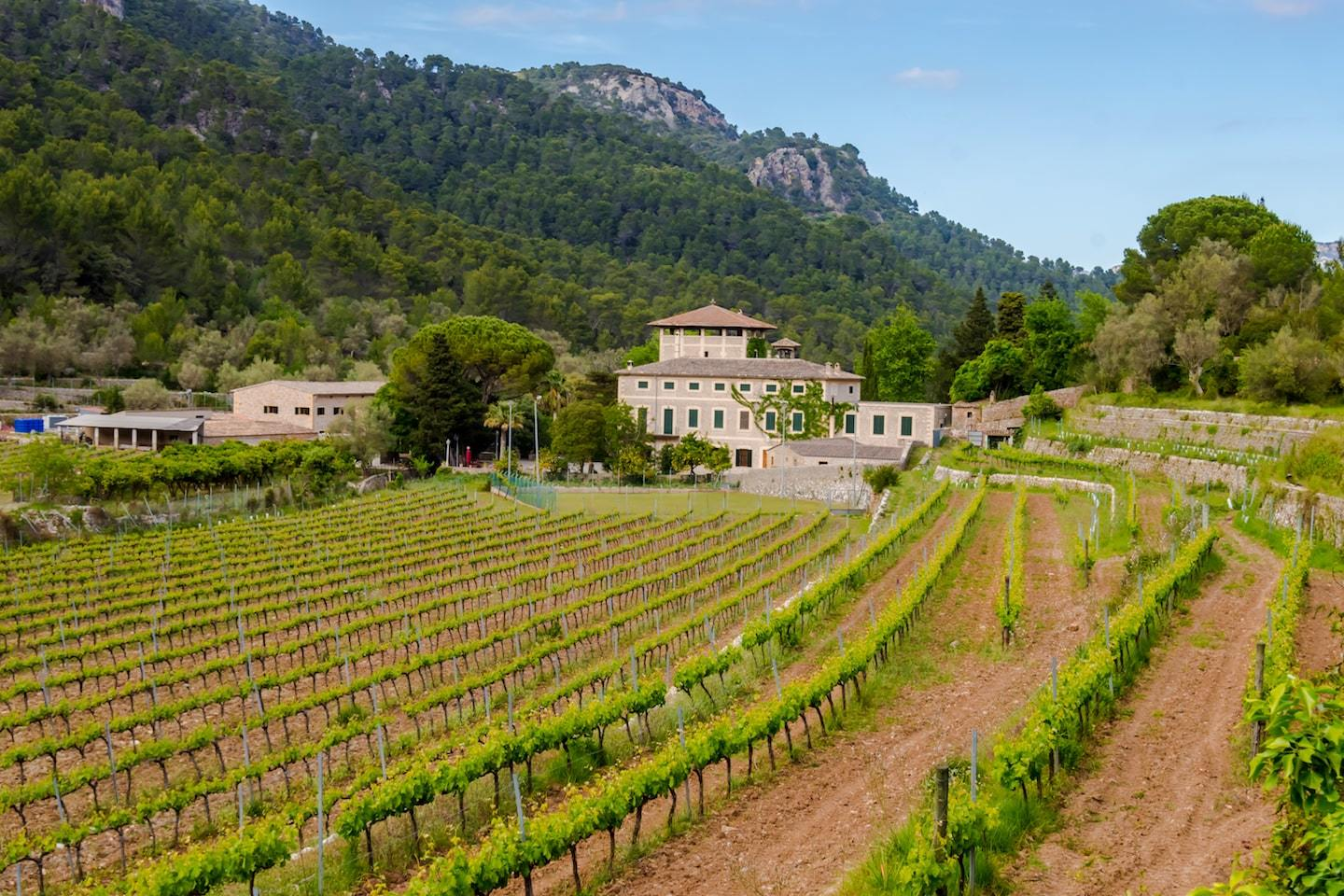 vineyard with house and mountains behind