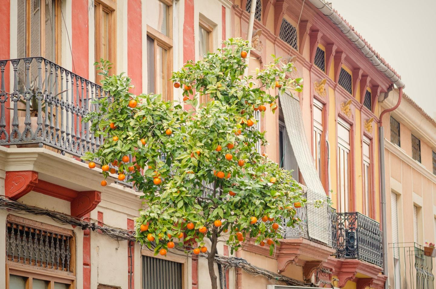colorful buildings with orange tree in front
