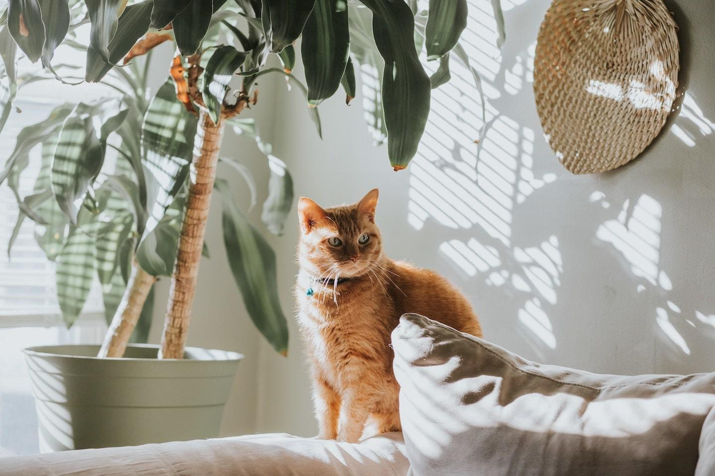 cat sitting on couch under plants casting shadow
