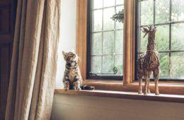 cat sitting on window sill next to toy giraffe