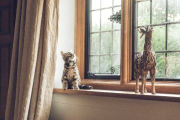 cat sitting on window sill next to toy giraffe