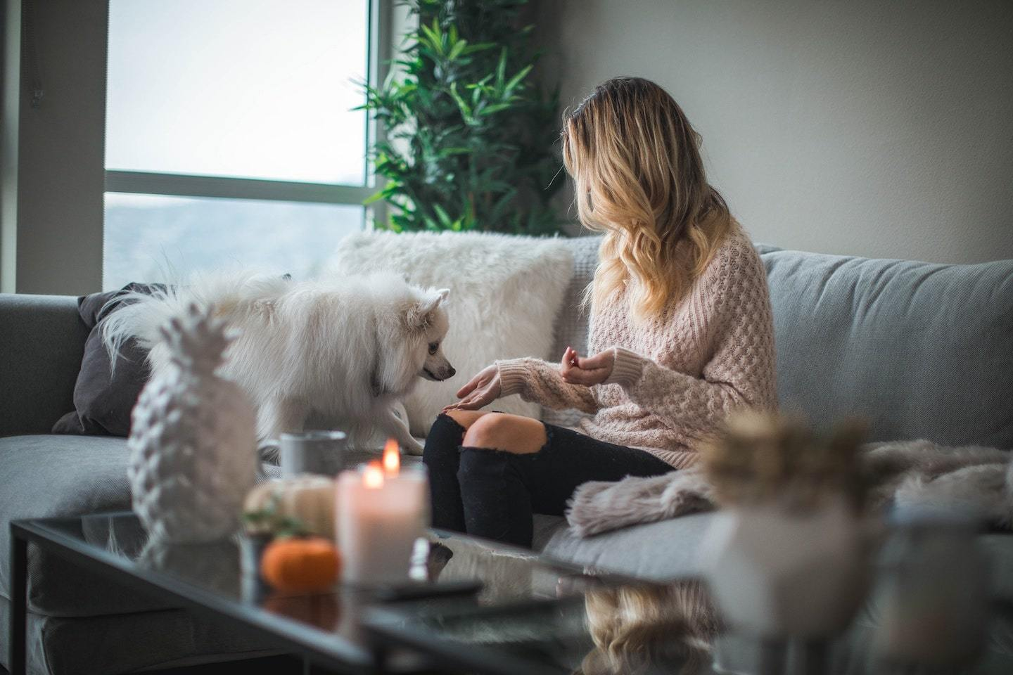 woman sitting on couch feeding small white dog