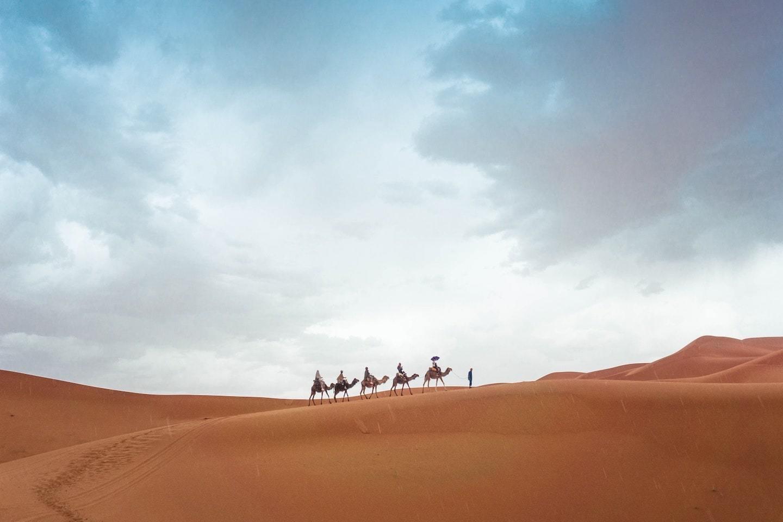 camels walking in desert under cloudy blue sky